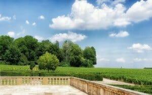 ブルゴーニュ地方の畑