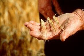 バランタイン 大麦